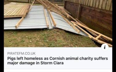 Storm Ciara Huffs & Puffs & Blows Away The Pigs Home!