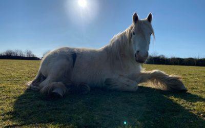 Equine Emergency. We Need You!
